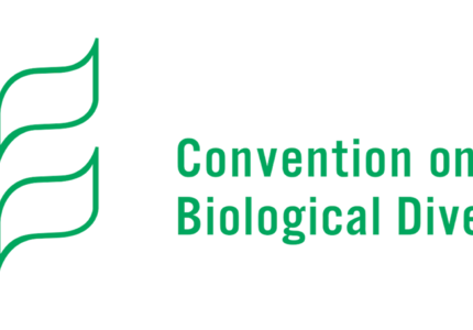 Preparations for COP15 Biodiversity: in a difficult context, the work does and must continue