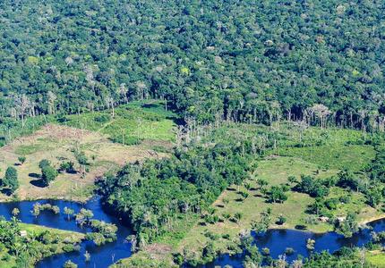 Faut-il reboiser l'Amazonie ?