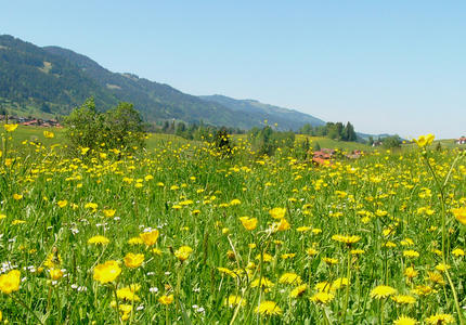 EU Biodiversity Strategy: the importance of permanent grasslands, in line with the Farm to Fork Strategy