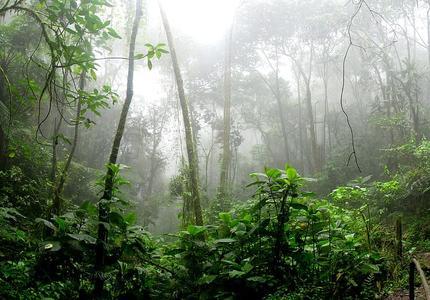 Engagements des entreprises pour la biodiversité : comment transformer l'essai ?