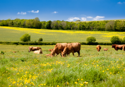 Pour une Europe agroécologique en 2050 : la preuve par nos travaux scientifiques