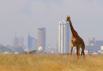 Next stop: Nairobi. Taking stock of preparations for biodiversity COP15 (2020, China)