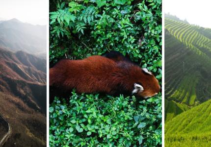Les impacts du Covid-19 sur les politiques de gestion de la faune sauvage en Chine et la préparation de la COP15 sur la biodiversité