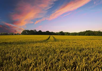 Une Europe agroécologique en 2050 : un scénario crédible, un débat à approfondir