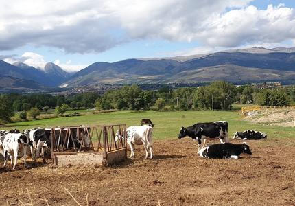 Which Common Agricultural Policy for the Green Deal?