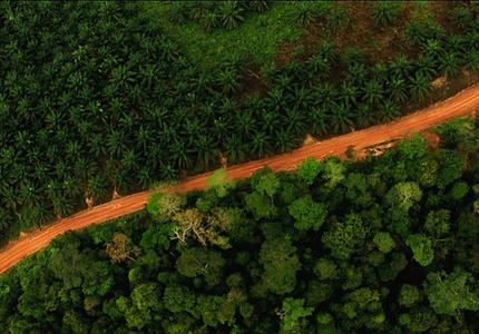 COP13 - Comment réellement intégrer la biodiversité dans l'économie ?